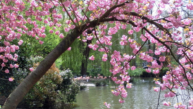 Wir suchen Ihre schönsten Frühlingsfotos! (Bild: Marion Friedberger)