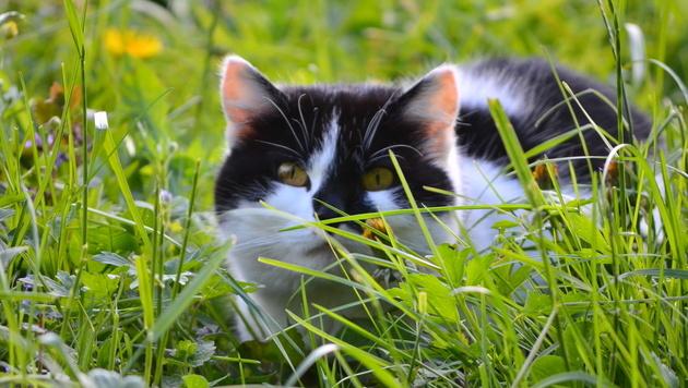 Wir suchen die schönsten Tierfotos! (Bild: Silvia Jörg)
