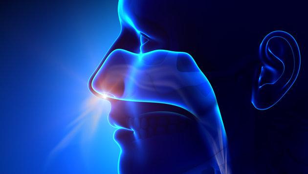 Menschen haben feinere Nasen als bislang gedacht (Bild: thinkstockphotos.de)