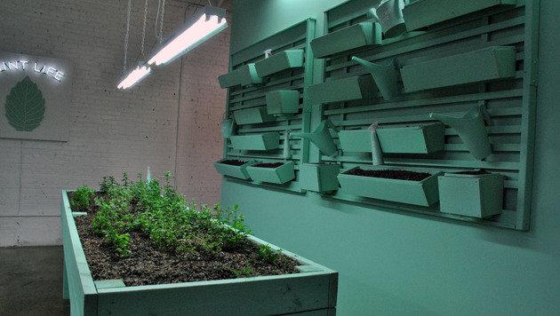 """Das Grün des """"Mint Room"""" ist eine Ausnahme (Bild: Clara Milena Steiner)"""