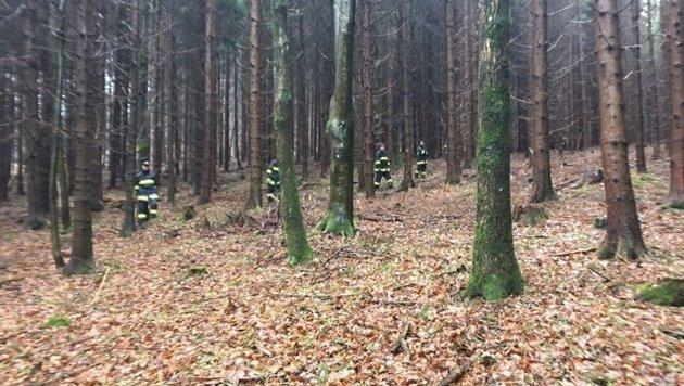 Im Wald suchten Einsatzkräfte nach dem vermissten neunjährigen Buben (Bild: Krone)