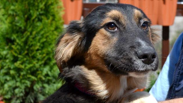 Melly (Bild: Animal Care International)