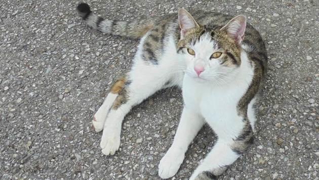 Wer kennt diese Katze? (Bild: zVg)