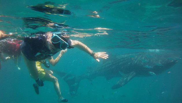Peter Jäger aus Klagenfurt mit einem Foto vom Tauchen mit Walen und Haien.