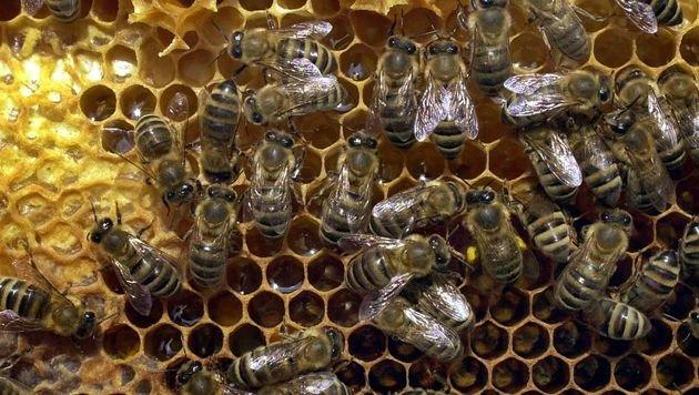 Baby von Biene in den Mund gestochen - Notarzt! (Bild: APA/dpa (Symbolbild))