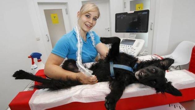 Zahnbehandlungen, Röntgen oder ein Ultraschall wie hier bei Kerstin Pabst mit Bator. (Bild: Markus Tschepp)