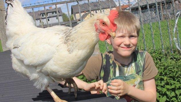 """Der siebenjährige Maximilian aus Stadl-Paura mit einer seiner Lieblinshühner namens """"Wolke"""". (Bild: Marion Hörmandinger)"""