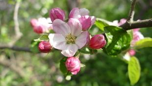 Wir suchen Ihre schönsten Frühlingsfotos! (Bild: Manfred Haderer)