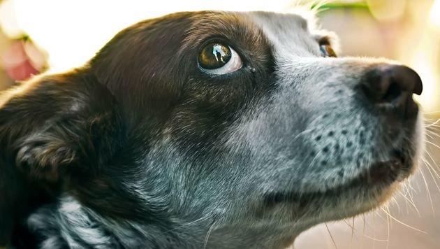 28 j hriger verletzt hund mit eisenstange schwer anzeige erstattet sterreich. Black Bedroom Furniture Sets. Home Design Ideas