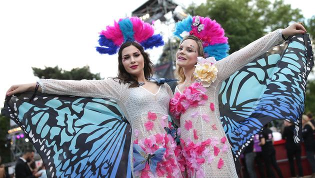 Zwei fesche Schmetterlinge (Bild: APA/GEORG HOCHMUTH)