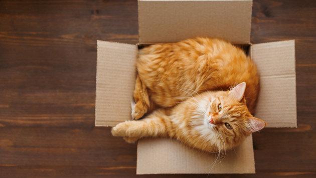 jetzt wissen wir warum katzen kartons lieben fotos gesucht tierecke. Black Bedroom Furniture Sets. Home Design Ideas