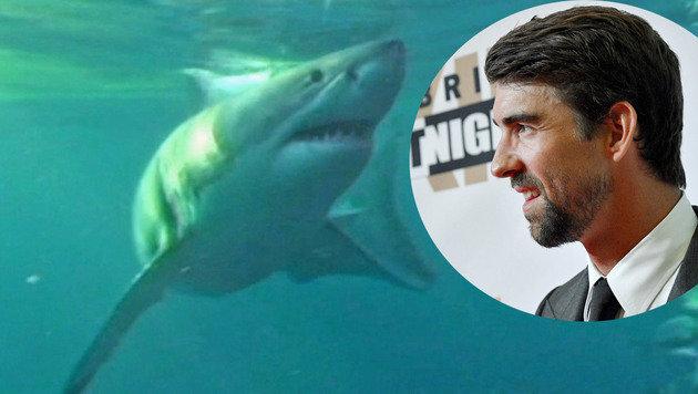 Tierisch! Phelps fordert Weißen Hai heraus (Bild: SID)