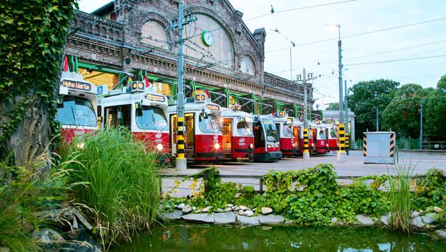 Wien: 70 Millionen für Ausbau von Bim und Bus (Bild: Wiener Linien/Helmer)