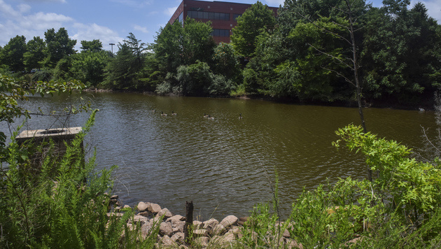 In diesem Teich wurde die Leiche der 17-Jährigen gefunden. (Bild: AP)