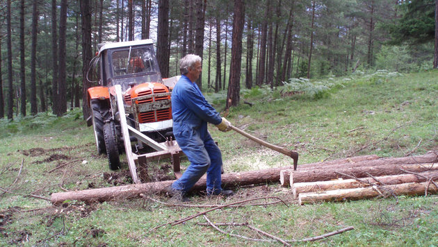 Liste Fritz und SPÖ behaupten, dass die vielen kleine Waldbesitzer brüskiert werden. (Bild: Markus Gassler)