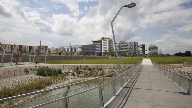 Wien: Leiche trieb im Badesee der Seestadt Aspern (Bild: Martin A. Jöchl)