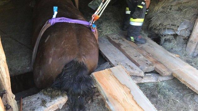 Pferde krachten durch Boden und steckten fest (Bild: FF Rottenmann)