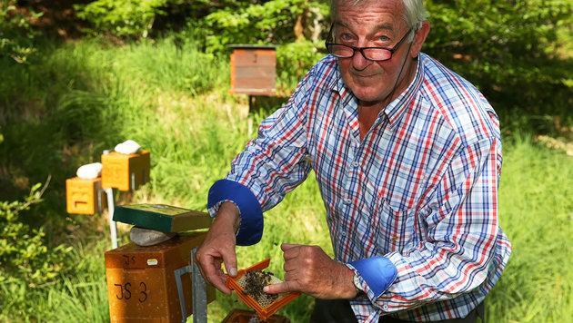 Josef Ablinger bei seinen geliebten Bienen-Königinnen, die er sogar züchtet. (Bild: gewefoto - Gerhard Wenzel)