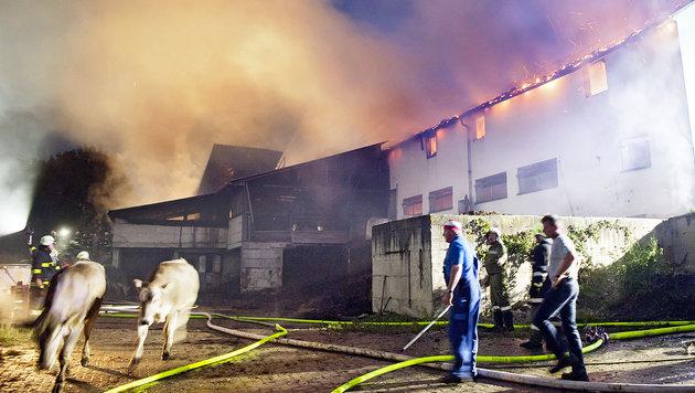 Die Wirtschaftstrakt des Anwesens stand in Flammen, 60 Rinder konnten gerettet werden. (Bild: Fotostudio Manfred Fesl)