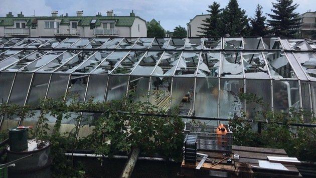 Ein durch den Hagel zerstörtes Glashaus in Mannswörth (Bild: APA/HGV)