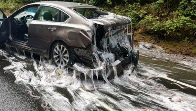Auch die Unfallfahrzeuge waren mit dem Schleim der Aale überzogen. (Bild: Oregon State Police)
