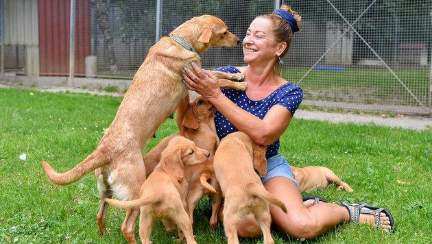 Tierheim-Leiterin Renate Bauer mit jungen Mischlings-Hunden (Bild: © Harald Dostal / 2017)