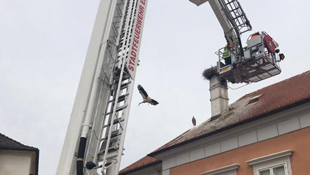 Jungstorch im Burgenland aus Dachrinne gerettet (Bild: APA/Feuerwehr Eisenstadt)