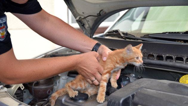 Pannenhelfer befreite Katze aus Pkw-Motorraum (Bild: APA/FF Baden-Stadt/Stefan Schneider)