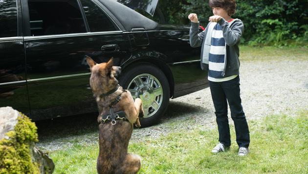 """Schäferhund """"Max"""" ist der """"Agent auf vier Pfoten"""" (Bild: Kinostar)"""