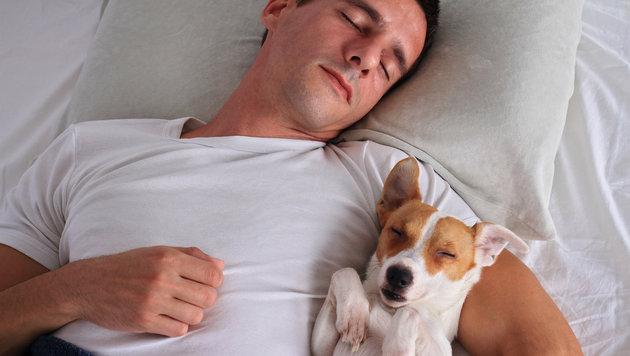 Studie: Hunde können bei Schlafproblemen helfen (Bild: stock.adobe.com)