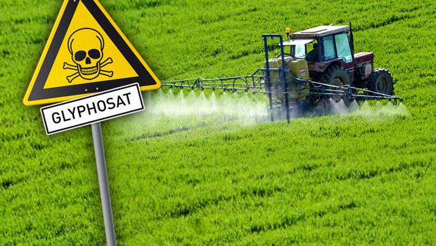 Glyphosat: Wie die Politik zur großen Gefahr steht (Bild: keinegentechnik.de, stock.adobe.com)