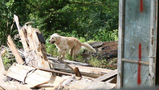 Die weltbesten Rettungshunde messen sich in NÖ (Bild: ÖGV/Cech)