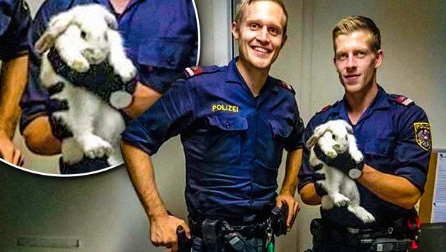 Polizei rettet Kaninchen aus Fängen zweier Katzen (Bild: twitter.com, krone.at-Grafik)