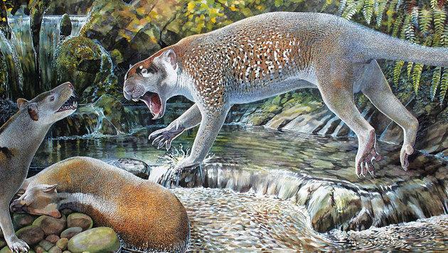 Illustration: So könnte die ausgestorbene Beutellöwen-Art ausgesehen haben. (Bild: Taylor & Francis/Peter Schouten)