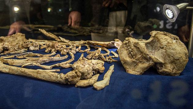 """Skelett von Vormensch """"Little Foot"""" präsentiert (Bild: AFP)"""