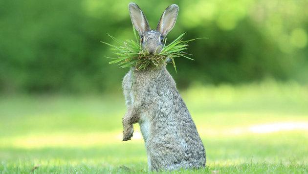 Das sind die schrägsten Tierfotos des Jahres (Bild: Olivier Colle/Comedy Wildlife Photo Awards)