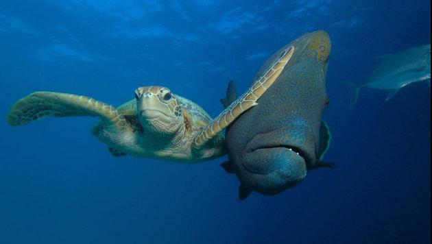 Das sind die schrägsten Tierfotos des Jahres (Bild: Troy Mayne/Comedy Wildlife Photo Awards)