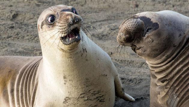 Das sind die schrägsten Tierfotos des Jahres (Bild: George Cathcart/Comedy Wildlife Photo Awards)