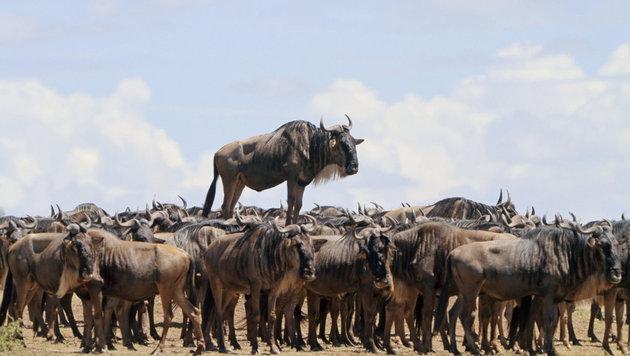 Das sind die schrägsten Tierfotos des Jahres (Bild: Jean Jacques Alcalay/Comedy Wildlife Photo Awards)
