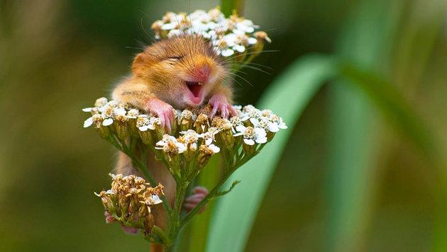 Das sind die schrägsten Tierfotos des Jahres (Bild: Andrea Zampatti/Comedy Wildlife Photo Awards)