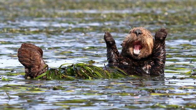 Das sind die schrägsten Tierfotos des Jahres (Bild: Penny Palmer/Comedy Wildlife Photo Awards)