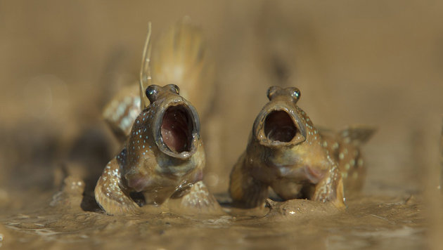Das sind die schrägsten Tierfotos des Jahres (Bild: Daniel Trim/Comedy Wildlife Photo Awards)