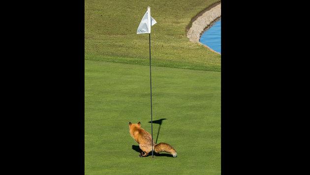 Das sind die schrägsten Tierfotos des Jahres (Bild: Douglas Croft/Comedy Wildlife Photo Awards)