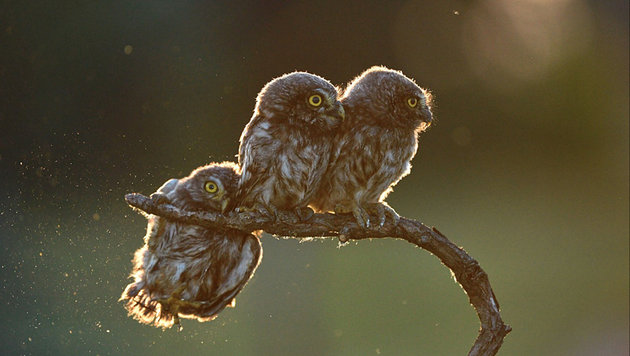 Das sind die schrägsten Tierfotos des Jahres (Bild: Tibor Kercz/Comedy Wildlife Photo Awards)