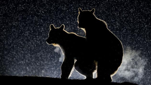 Das sind die schrägsten Tierfotos des Jahres (Bild: Bence Mate/Comedy Wildlife Photo Awards)