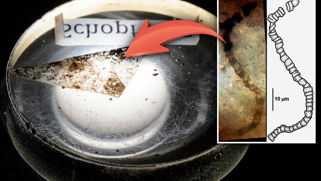 Ältester Nachweis für Leben auf der Erde gefunden (Bild: J. William Schopf, Jeff Miller, krone.at-Grafik)