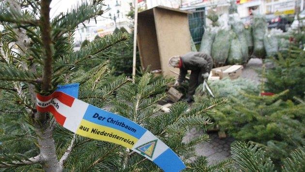 So klappt's mit dem Christbaum (Bild: APA/HERBERT PFARRHOFER)