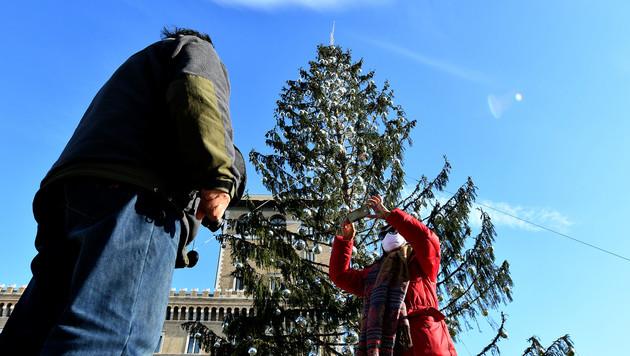 Christbaum in Rom tot: Hohn für Bürgermeisterin (Bild: AFP)