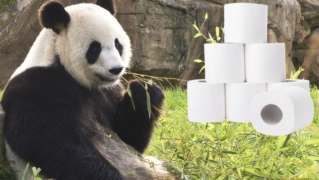 Chinesische Firma plant Klopapier aus Panda-Kot (Bild: stock.adobe.com, krone.at-Grafik)