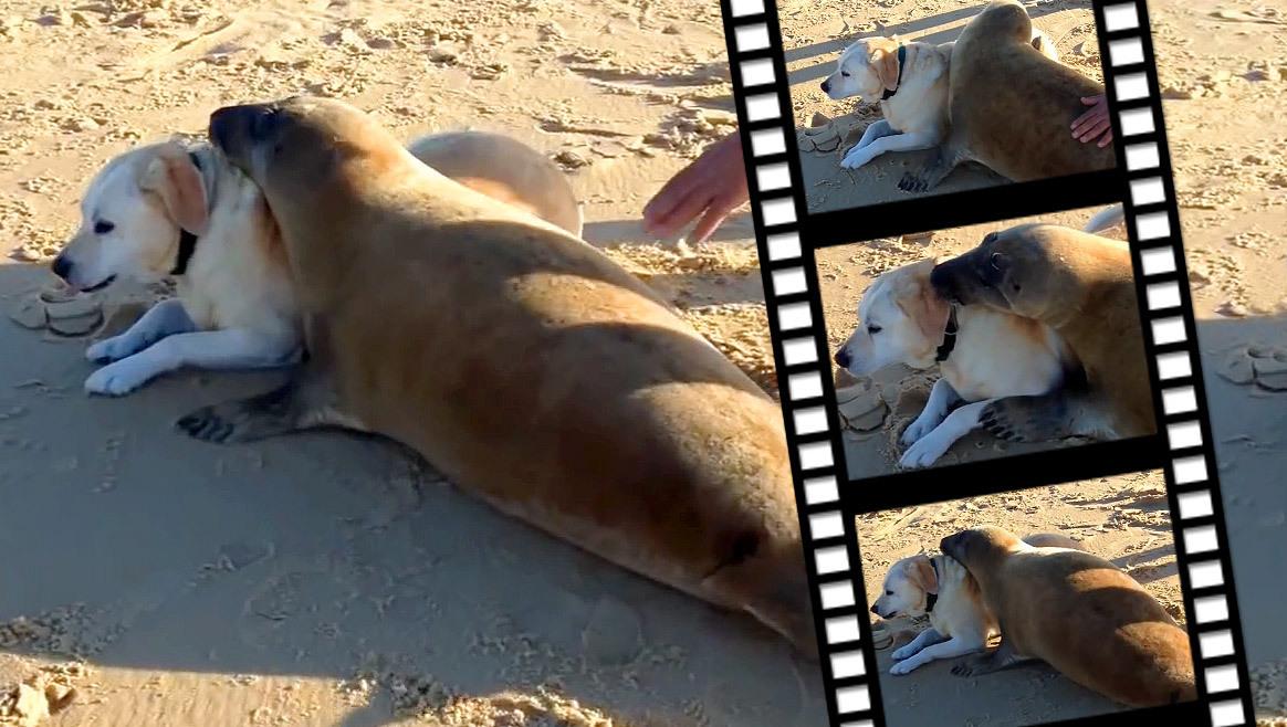 Süß: See-Hund trifft Land-Hund  (Bild: YouTube.com)
